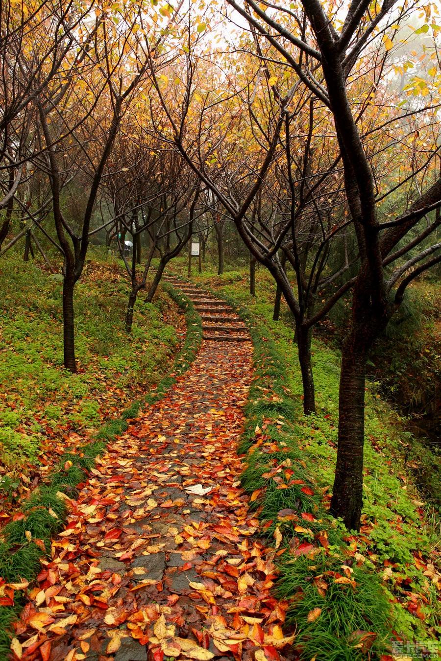为黄而去--连续四周神游四明山、茅镬之二_第贵阳黄果树瀑布自驾游攻略6图片