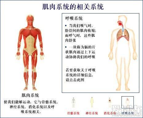 女人体全身器官�_人体全图-与\