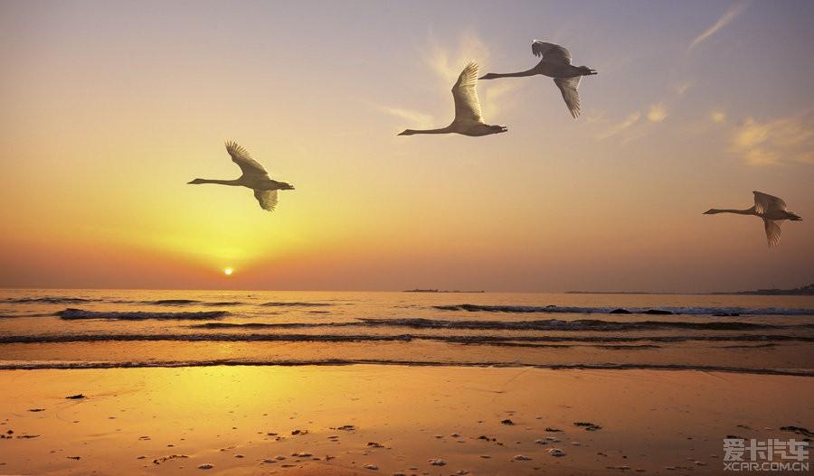 鹤舞白沙,我心飞翔······_威驰论坛_X