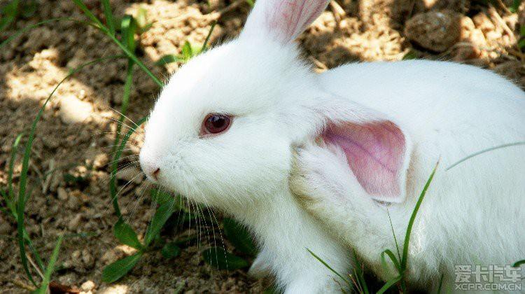 可爱的小白兔_标致2008论坛
