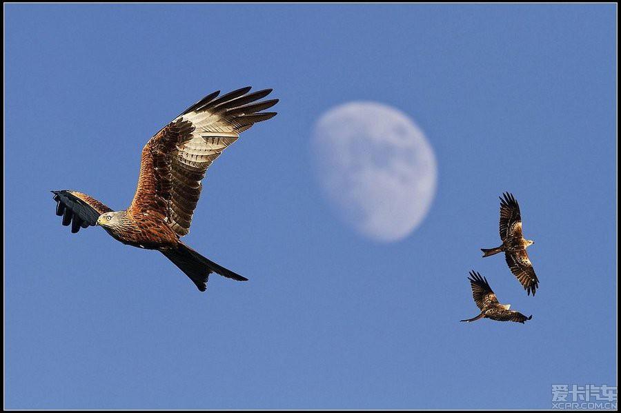 为了 天空 飞翔的小鸟 知足常乐 爱卡汽