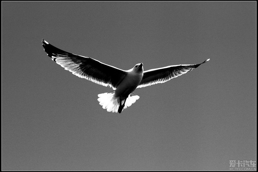 为了天空飞翔的小鸟_知足常乐