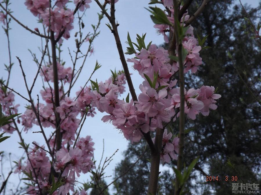 宁阳神童山森林公园看梨花