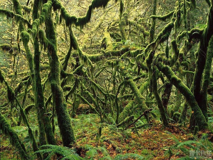 > 【欣赏】清新唯美的绿色,森林和树木