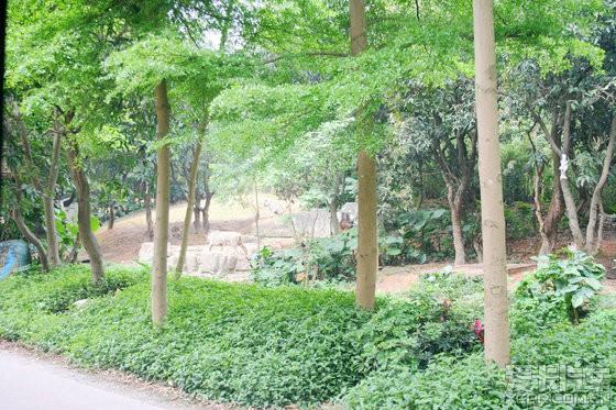 【精华】爸爸去哪了-广州长隆野生动物园