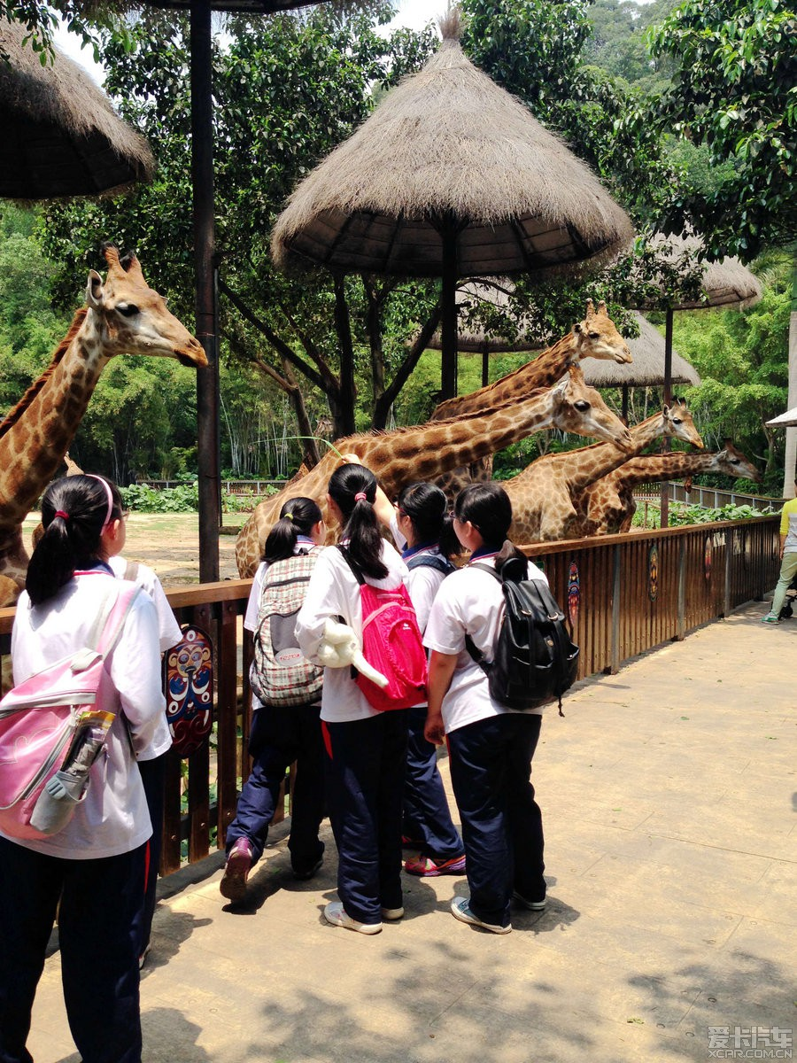 > 爸爸去哪了-广州长隆野生动物园