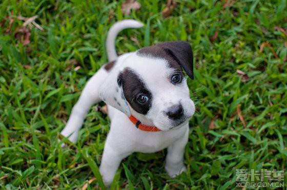 【精华】可爱的动物宝宝