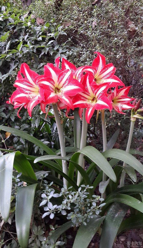 漂亮的六角花