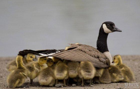 动物界母子互动温情瞬间