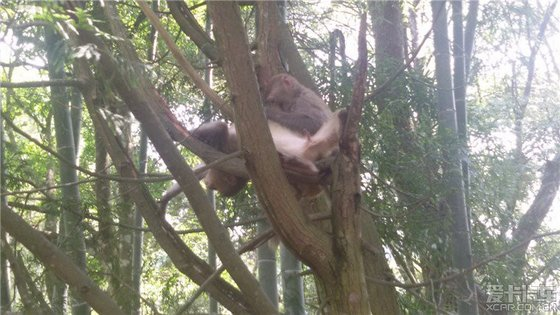 两只猴子在树上