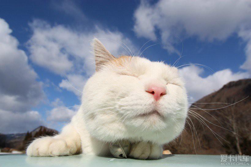 严格说是一只体重超标的大肥猫