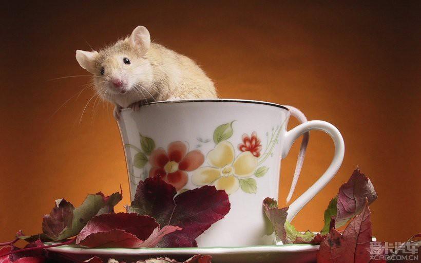 > 仓鼠是一种可爱的生命体