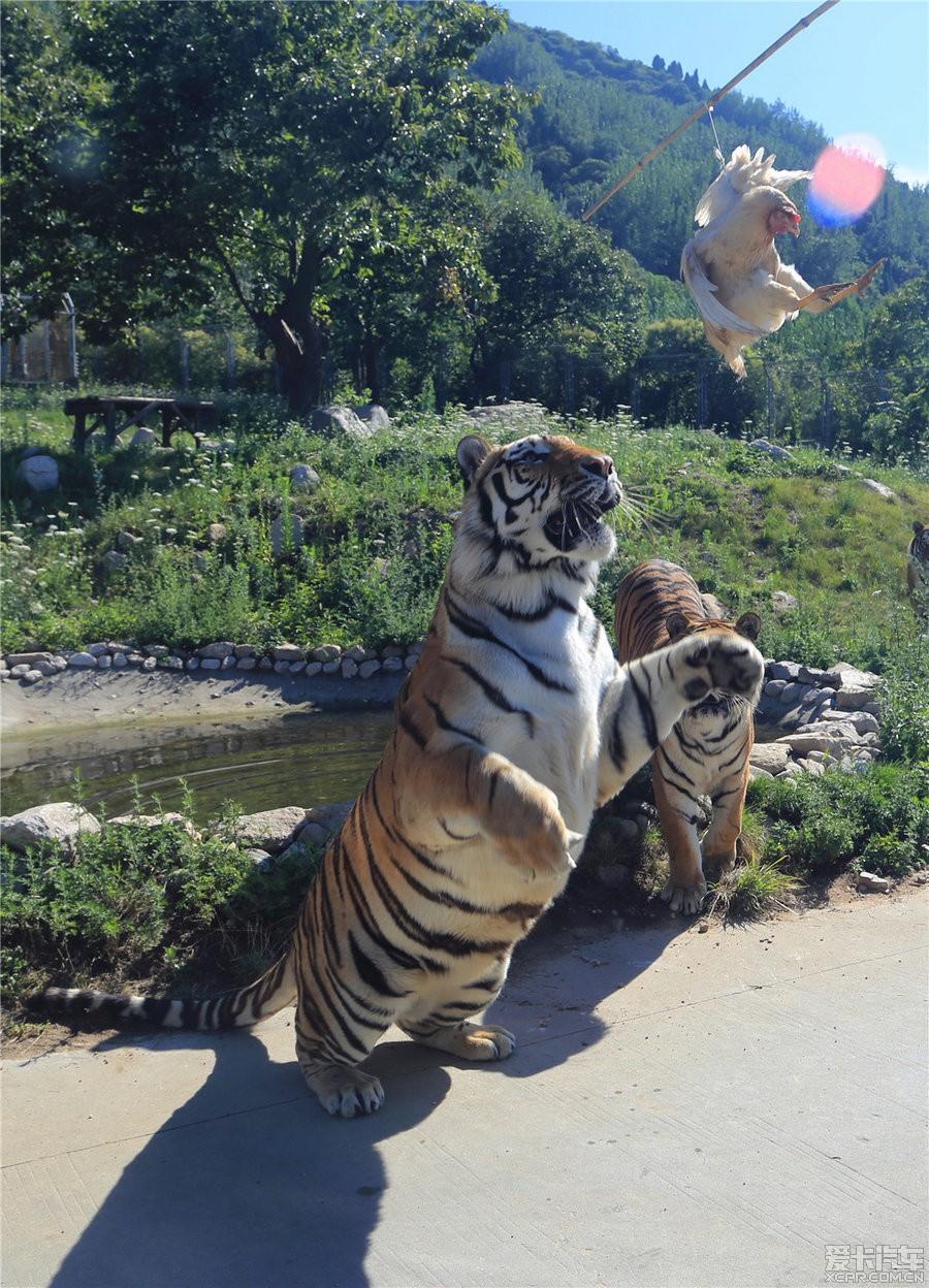 西安秦岭野生动物园-与动物的亲密接触