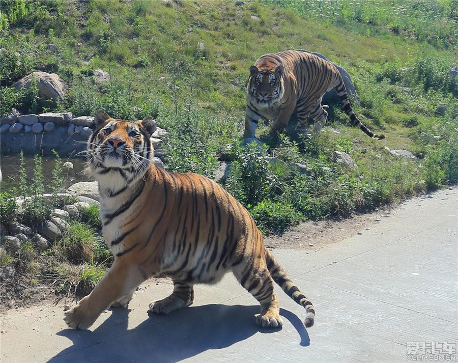 西安秦岭野生动物园-与动物的亲密接触_陕西论坛_xcar