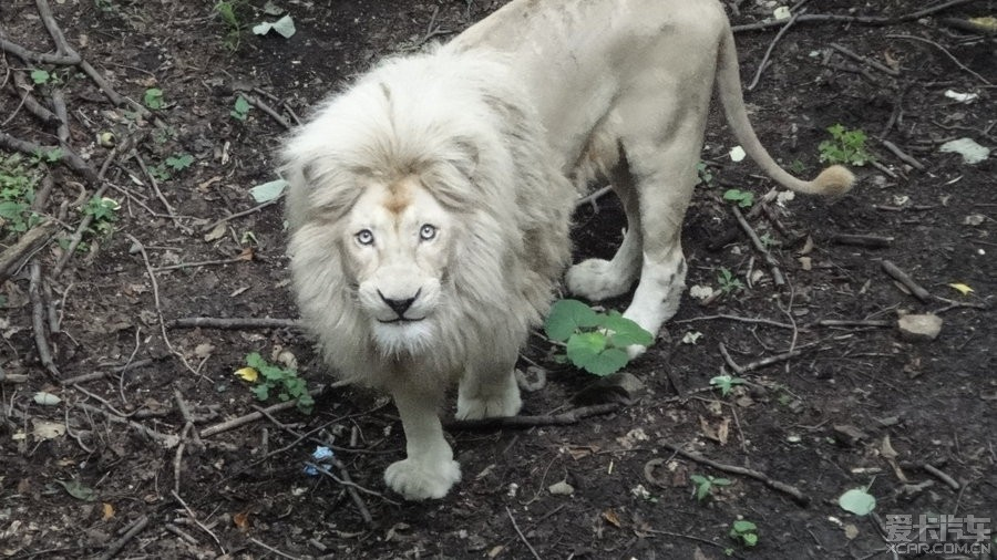 > 体验大自然-北方森林野生动物园(哈尔滨)