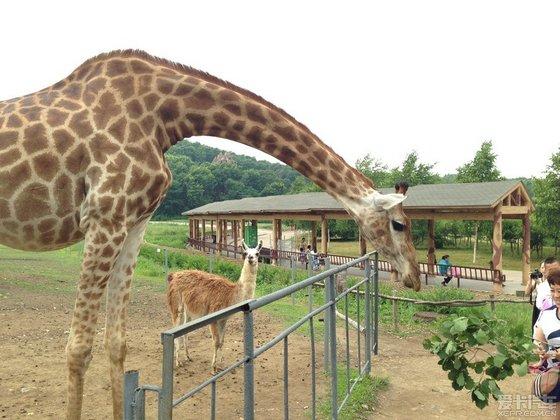 【精华】体验大自然-北方森林野生动物园(哈尔滨)