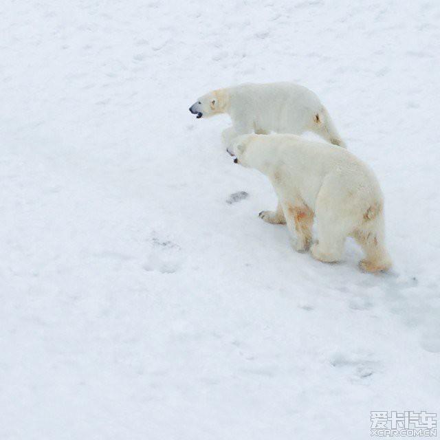 共200多的野生动物,包括熊