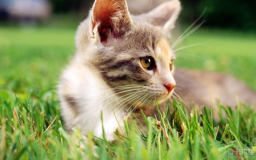 草地上可爱的小猫咪_威驰论坛