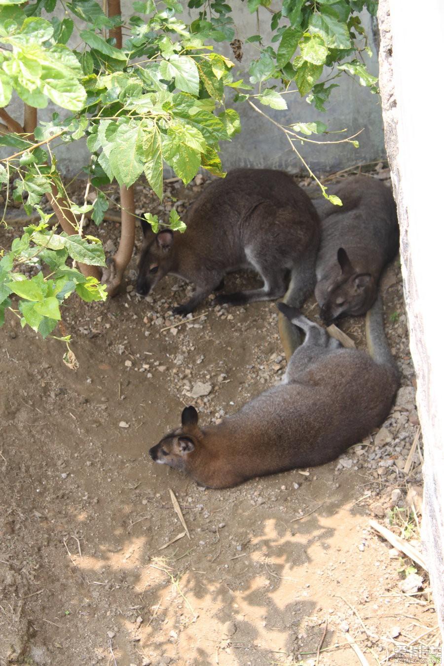 青岛野生动物园游记_gl8论坛