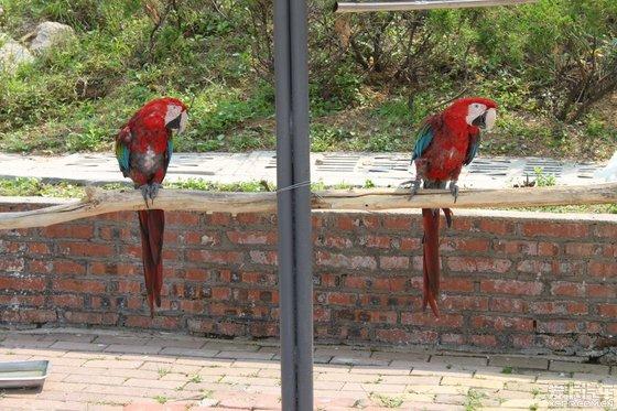 青岛野生动物园游记