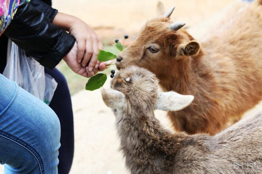 孩子们争着亲近小动物!