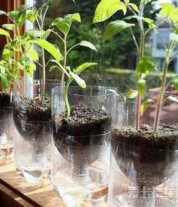 废弃的塑料瓶diy花盆,以后吃完的油壶和可乐瓶,都可以制作成漂亮的花