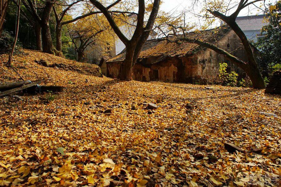 于是,我選擇了浙江省湖州市長興小浦鎮的八都岕村,哪里號稱有十里銀杏