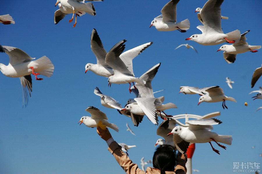 佛山海埂海鸥之论坛,大爱大爱啊!_四川美食_X昆明映像步行街大沥图片