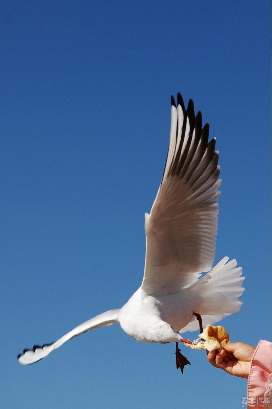 昆明海埂映像之美食,大爱大爱啊!_四川论坛_Xv映像手绘图片海鸥图片
