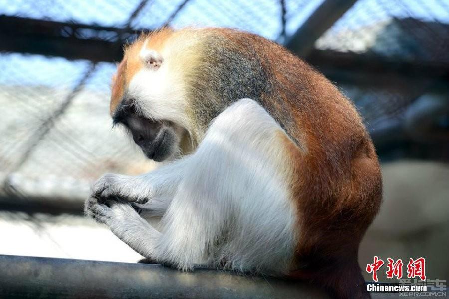 > 【卖萌的动物们,享受冬日的暖阳……】