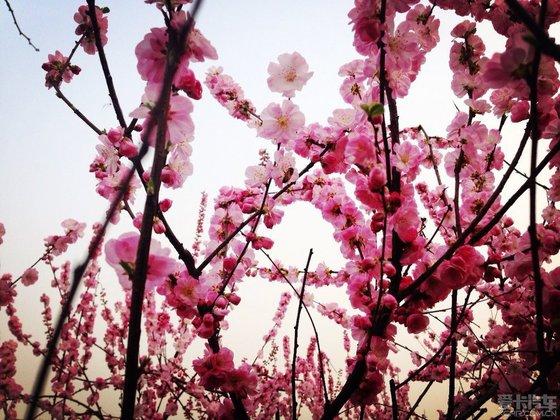春天让小动物也苏醒愉悦