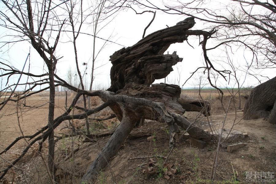 梦见在树上砍树枝