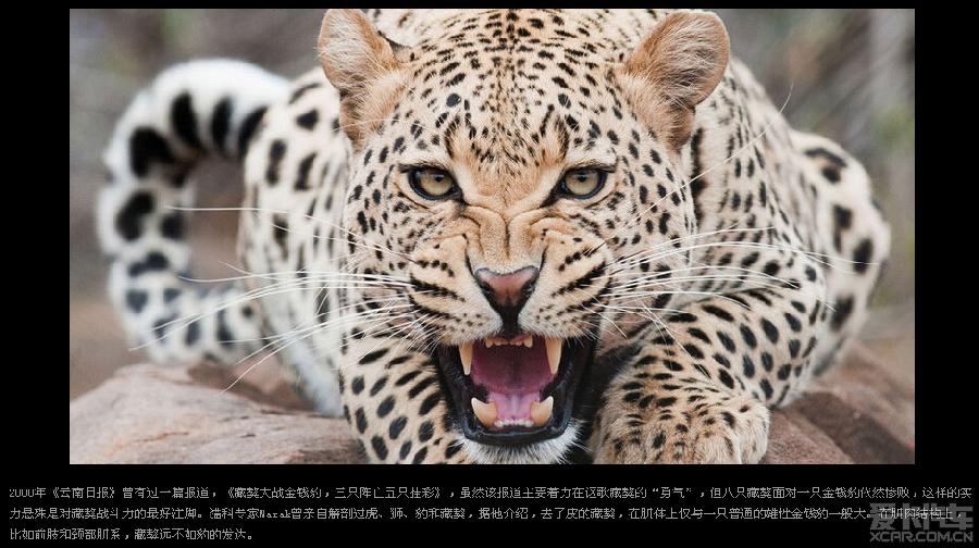 猫科动物图片种类大全