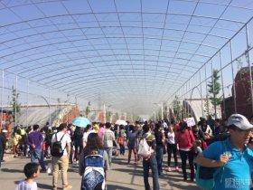 #周末不窝家#参加儿子幼儿园运动会
