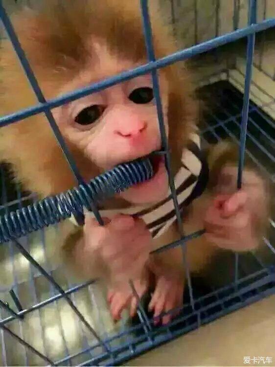 > 各种欧美豪车低价卖,送可爱猴子一只,扫头像加微信!