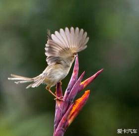 周末看鸟(已更新)