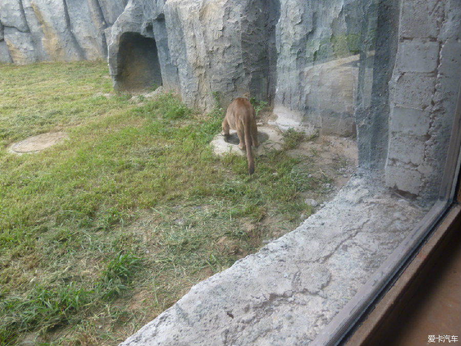 齐齐哈尔三日游 龙沙动植物园