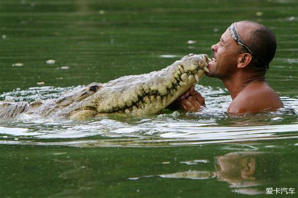 狸和鳄鱼_奄奄一息的鳄鱼给一个男子救治,隔天鳄鱼登门拜访!