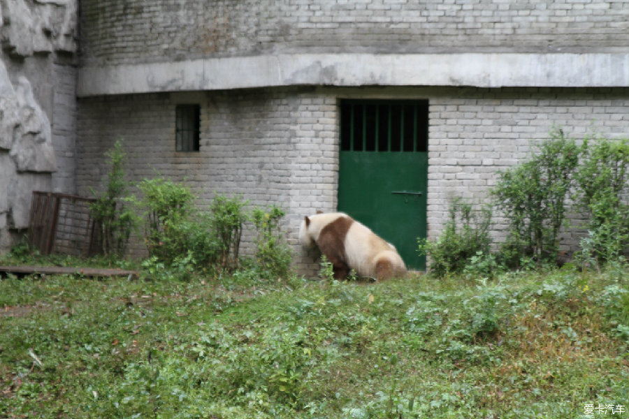 攻略汉中国庆假期自驾游熊猫谷、黎坪山水_第成都三亚旅游景区自由行图片