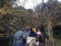周日去了白岩寺,人多,银杏叶不多