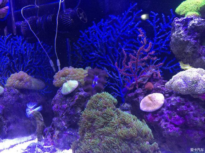 石头上有很多的海洋生物,如贝,小螃蟹等 2,沙子(沙子和石头都可以平衡