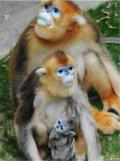 猴年大吉,猴哥们来拜年啦!