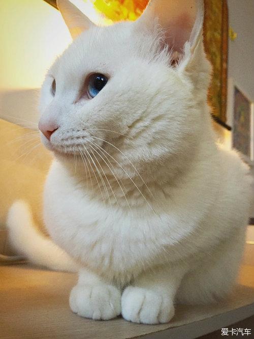 生了五只小猫咪