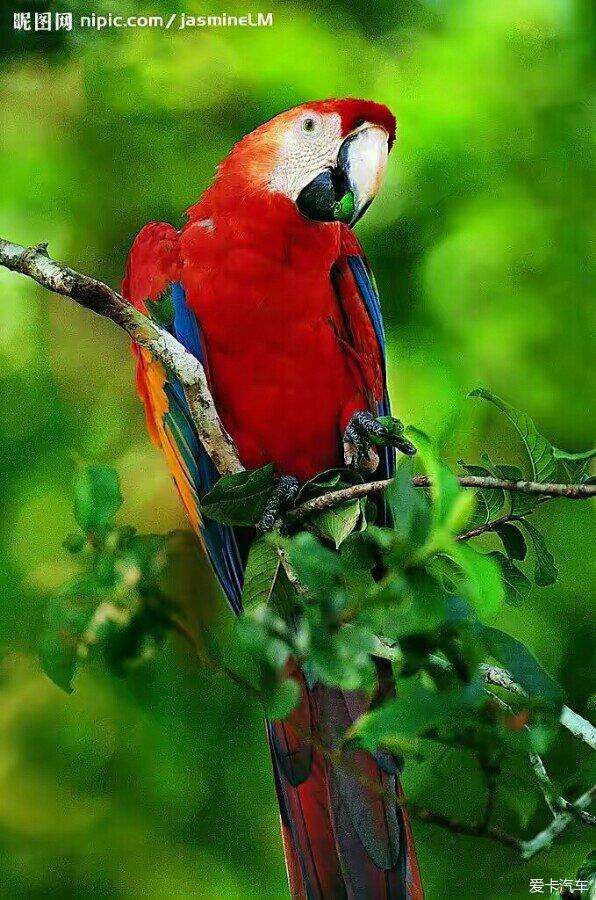哪里有金刚鹦鹉收养?
