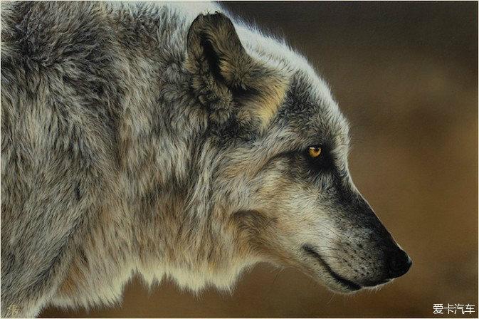penescu的野生动物绘画作品