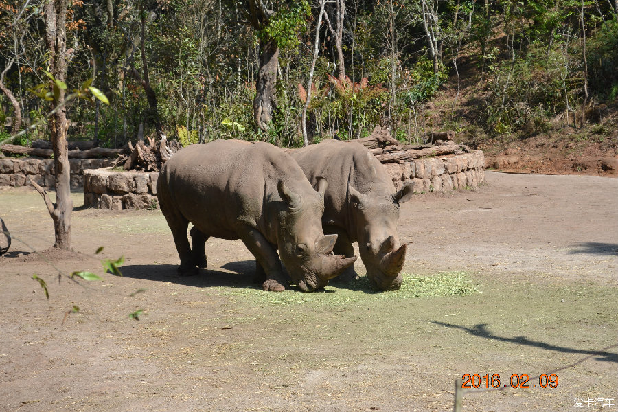 越南 动物园 爪哇犀牛