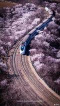 开往中国最美春天的高铁,一站一景美得要哭