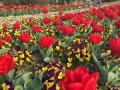 今日话题:踏春