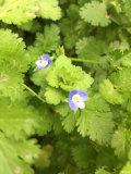 热爱春天,热爱大自然