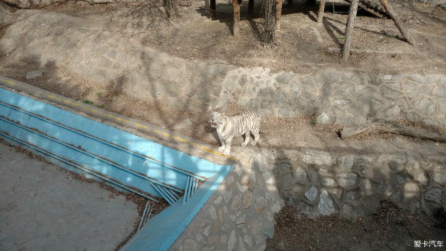 > 游:北京动物园